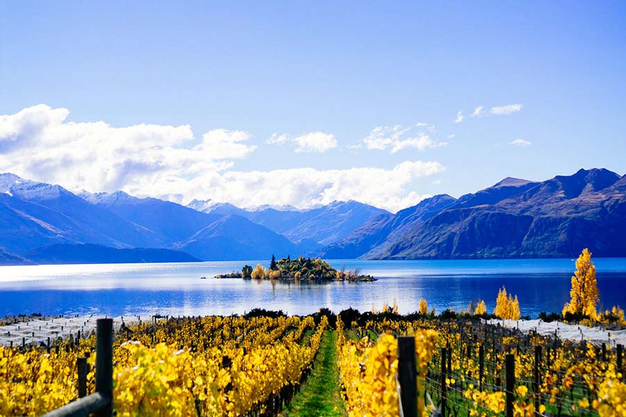 Rippon Vineyard Lake Wanaka winery