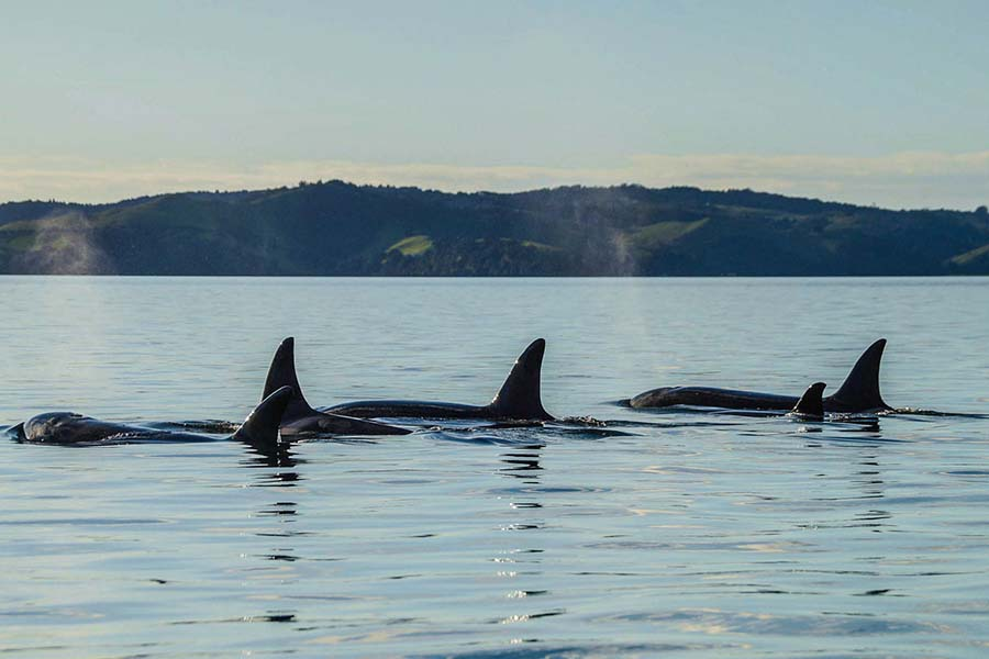 dolphin and whale watching New Zealand